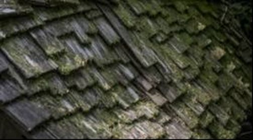 Moss Covered Wooden Shingles Richmond Virginia Roofing