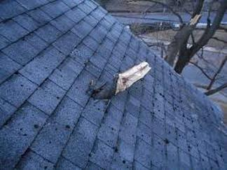 Branch in Roof Richmond Virginia Roofing