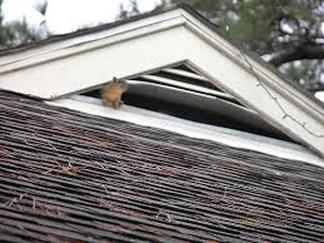 Squirrel has Pushed Through Attic Vent Richmond Virgina Roofing
